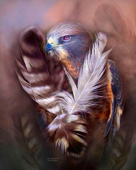buzzard4