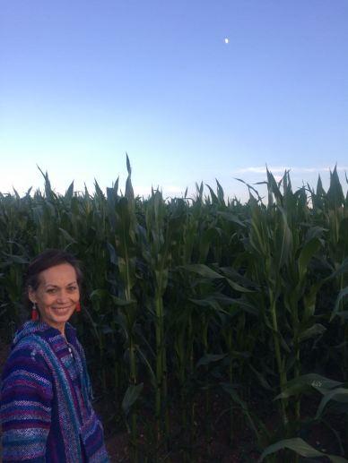 corn ali2