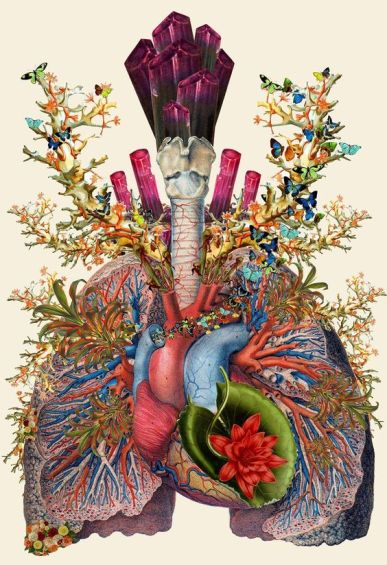 lungs 3