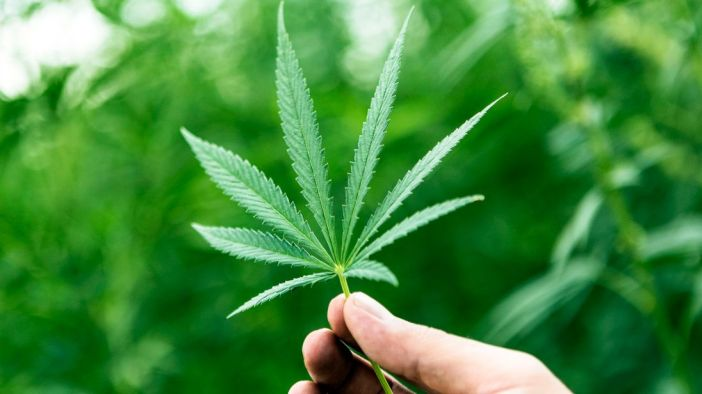 skynews-cannabis-cbd_4340071